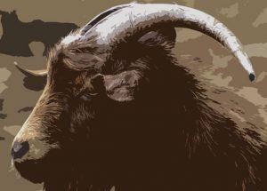 rok kozy